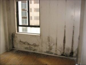 An indoor mould growth